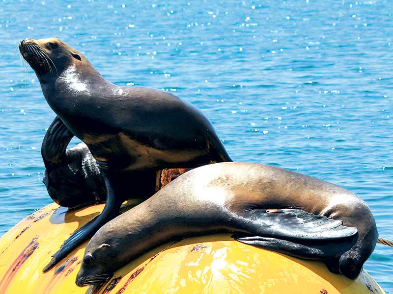 Changes to sea lion protections in Auckland Islands