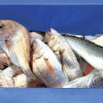 Changes to fisheries rules for sustainability