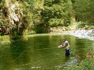 Wilderness river trout focus on cicadas