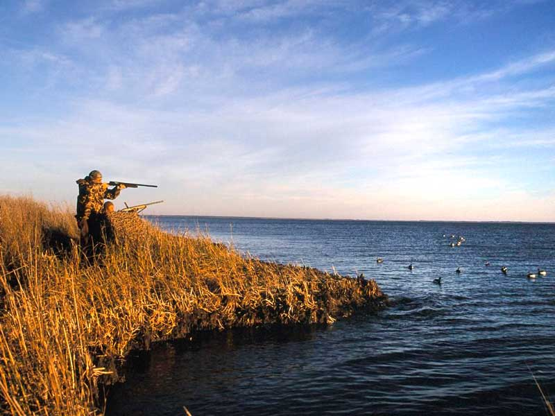 Duck shooting tips