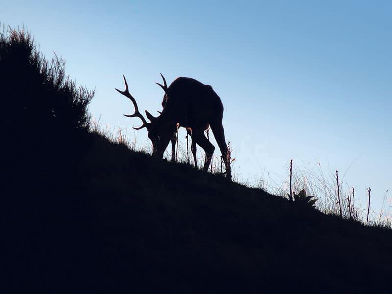 NZDA condemns poaching