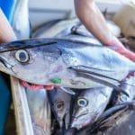 Sustainable Seafood Week: protecting NZ's oceans