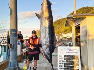 360kg black marlin