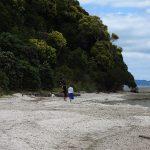 Cockle Bay full-year shellfish ban begins